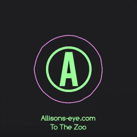 Allison's Eye: To the Zoo